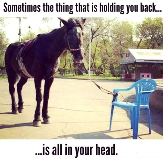 funny-horse-tied-up-plastic-chair
